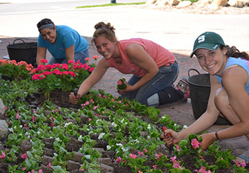 Pollys Planting Pluckers Gardening Services