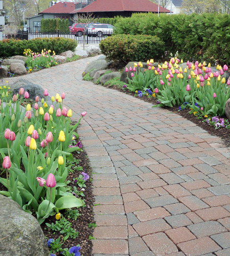 Pollys Planting Plucking Pier Restuarant Walkway Tulips