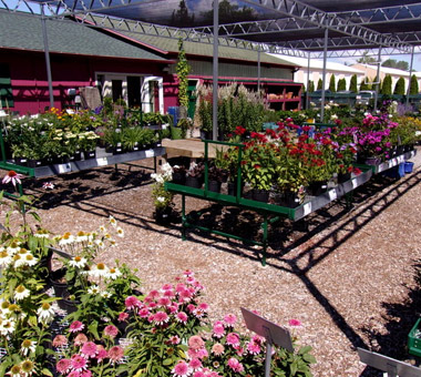 Pollys Planting Plucking Garden Center