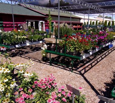 Pollys Planting Plucking Garden Center
