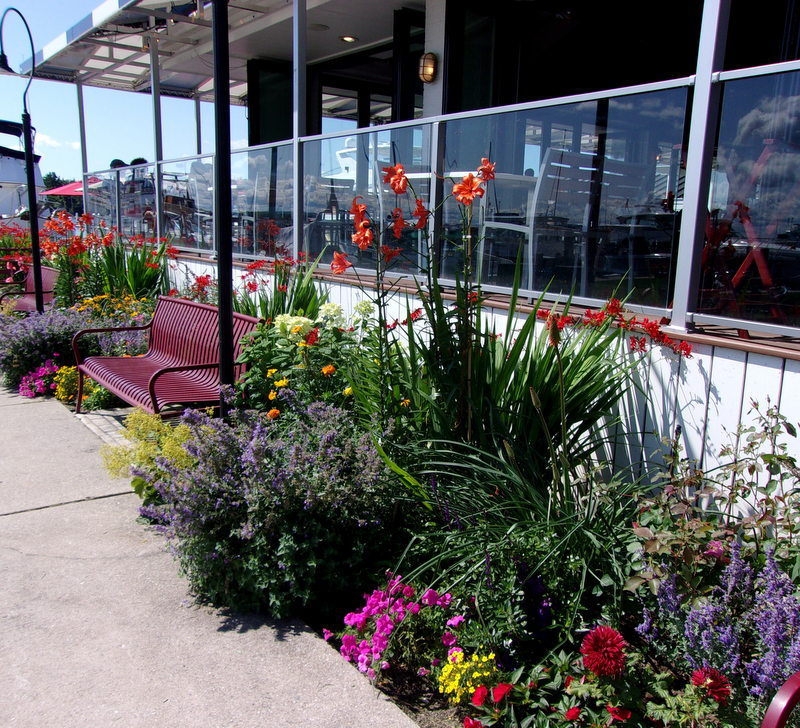 Pollys Planting & Plucking Staffords Pier walkway perennial flower gardens