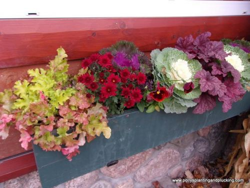 Fall window box with heuchera mums ornamental cabbage pansies