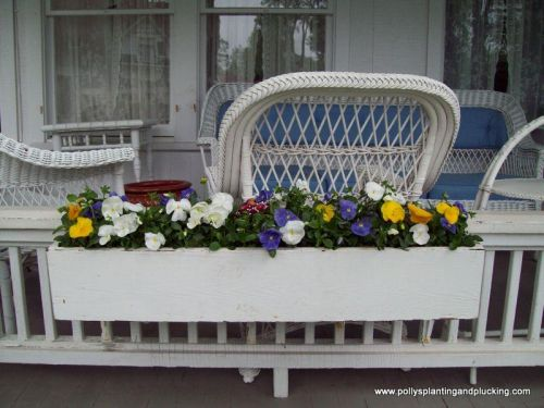 Spring pansies and english daisies in window box