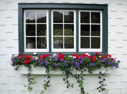 red white blue flowers in window box