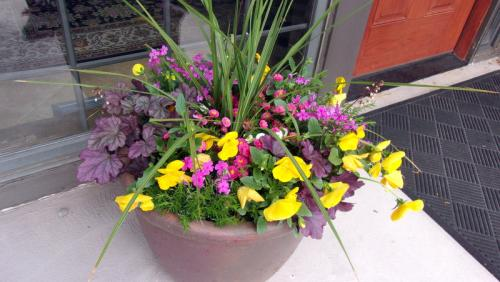 spring planter with pansies heuchera spike phlox english daisies