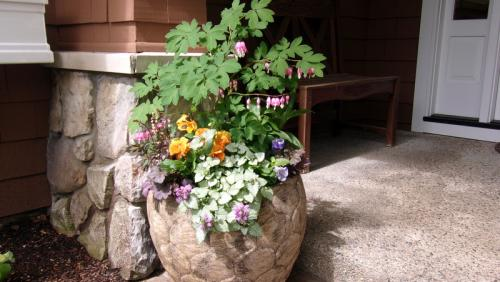spring planter with pansies bleeding heart euphorbia