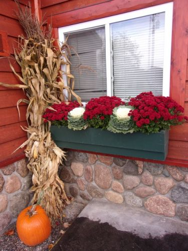 Fall window box with mums ornamental cabbage and corn shock