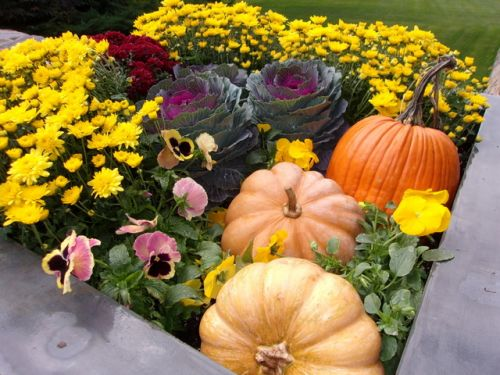 Fall planter with mums ornamental cabbage pansies pumpkins