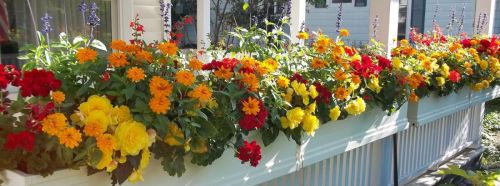 bright colorful flower boxes